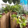 Eco gardening secrets from Africa