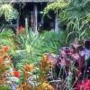 Exotic Garden videos