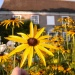 How to garden in a changing climate