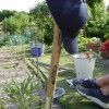 Feeling the heat on the allotment