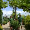 May delights at Athelas Plants