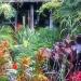 Bank Holiday Garden Visit