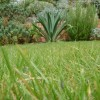 Less lawn makes greener gardens
