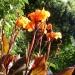 Exotic Garden flourishes in Indian summer