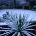 Snow scenes in the garden