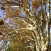 Climate change makes trees grow faster
