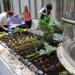 London Gardeners at work