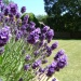 Hosepipe ban – top plants for 2012