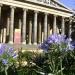 Agapanthas bloom all summer