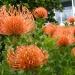 Climate Change Gardening in Australia