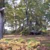 Visit Woods.org.uk