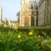 "Royal Wedding ""greens"" Westminster Abbey"