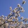 Cold winter brings beautiful blossom