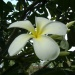 Tropical Plant Adventures