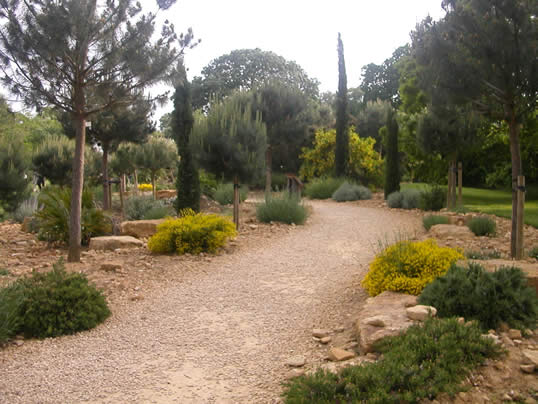 The Native Wild Plants Of The Mediterranean Thrive In Dry Conditions .The  Garden At Kew Is Planted With Ancient Cork Oaks In Red Soil, A Grove Of  Gnarled ...