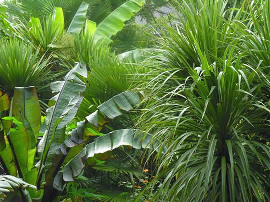 Exotic Gardens Capture Uk Passions My Climate Change Garden