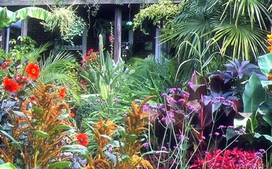 Exotic Garden Videos My Climate Change Garden