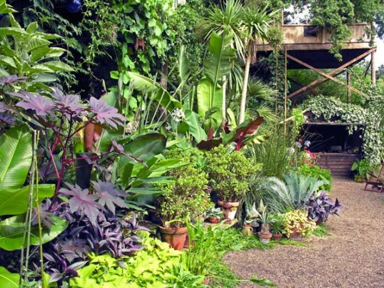 Gallery For Tropical House Garden