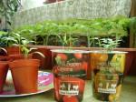 london-indoor-gardening-026