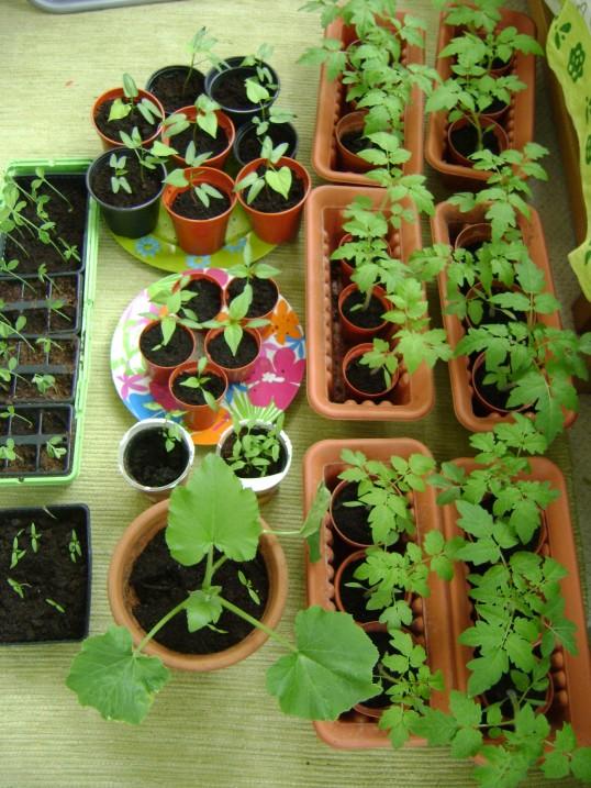 london-indoor-gardening-027