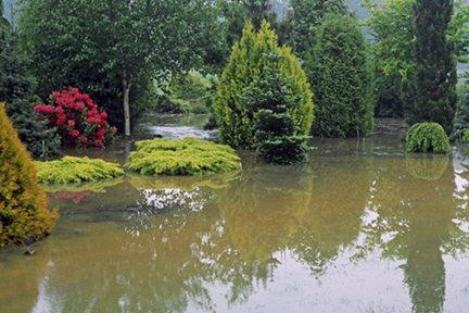 Flooded garden :(