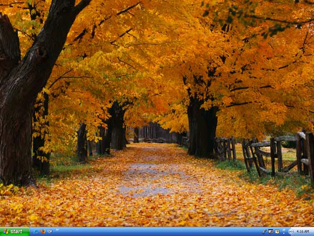 autumn-beauty-trees-leaves | My Climate Change Garden