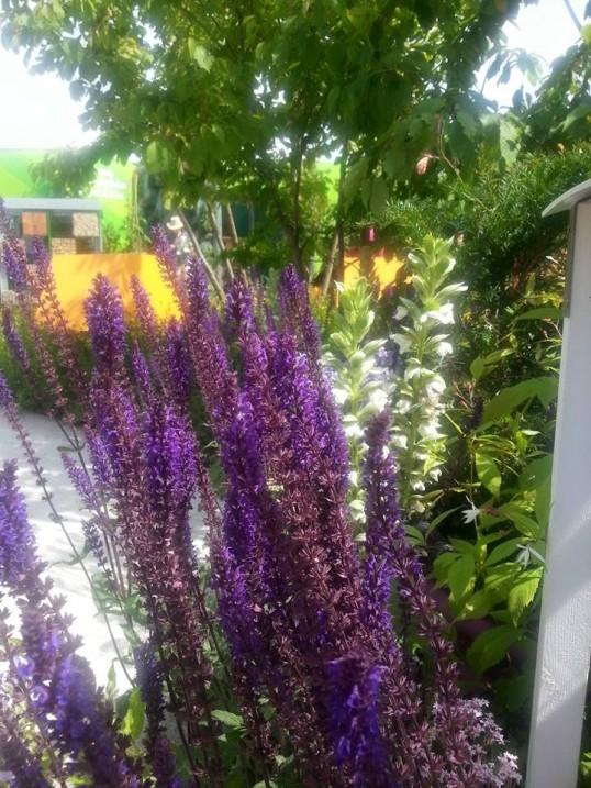 hampton court gardens.jpg 2